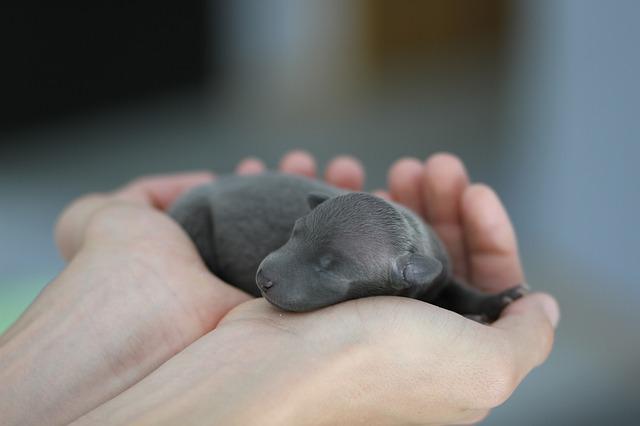 čerstvě narozené štěně