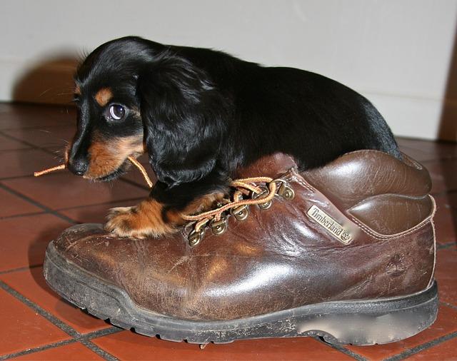 štěně s botou