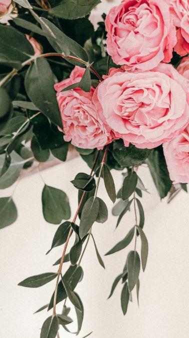 růže na zdi